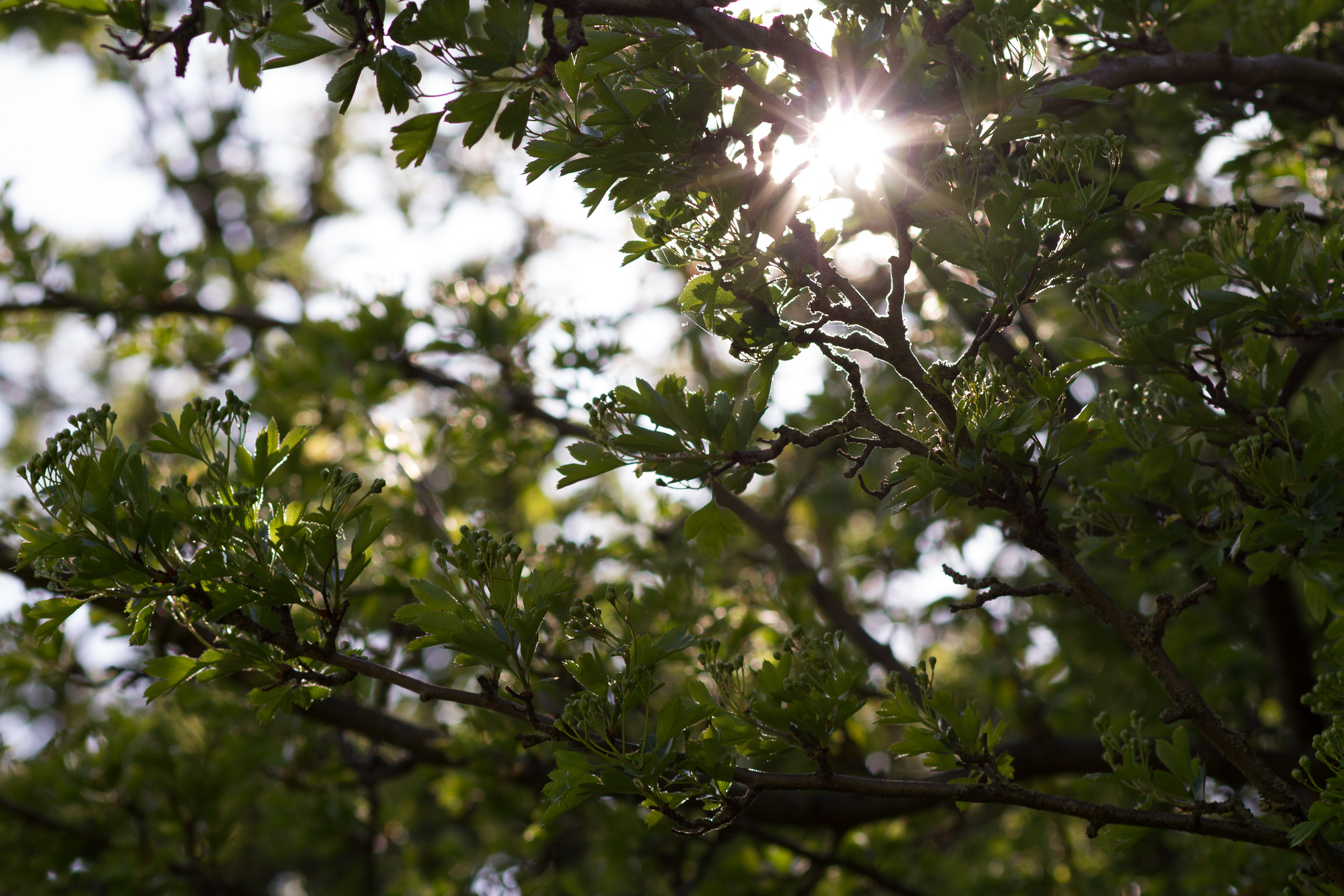 tree, branch, sun, sunlight, light , shadow, backlight, outdoor, monthly picture © André Schunert